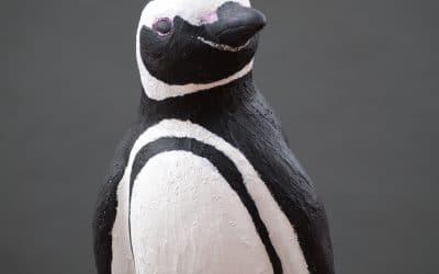 The Magellanic Penguin